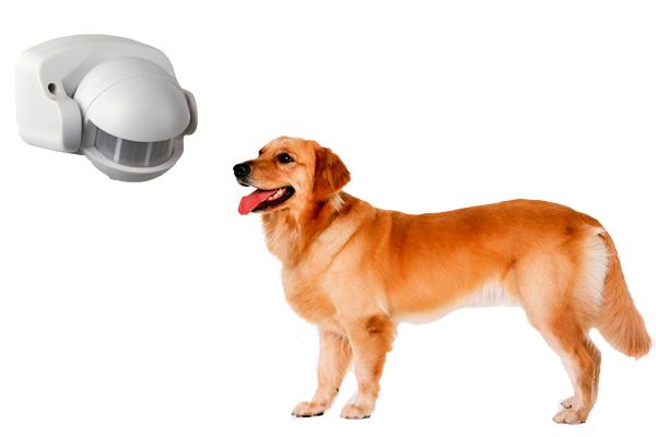 Реагирование датчика движения на домашних животных
