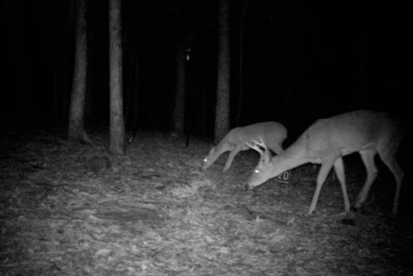 Картинка изображения автономного видеорегистратора Егерь-М ЛТЛ на охоте