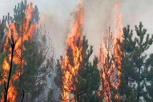 Беглый верховой лесной пожар