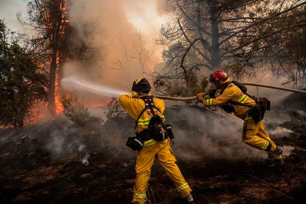 Процесс тушения верхового лесного пожара