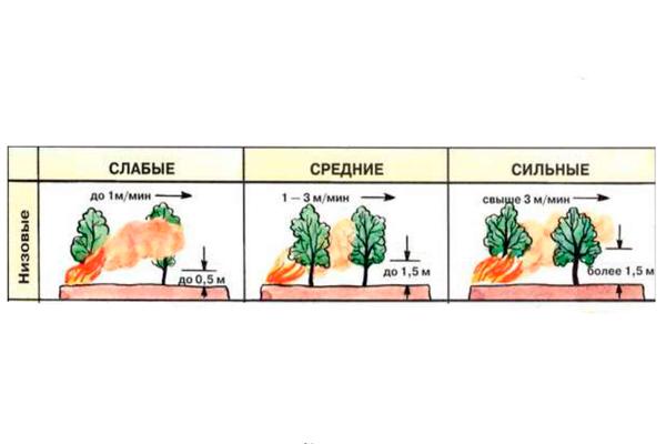 Классификация низовых лесных пожаров