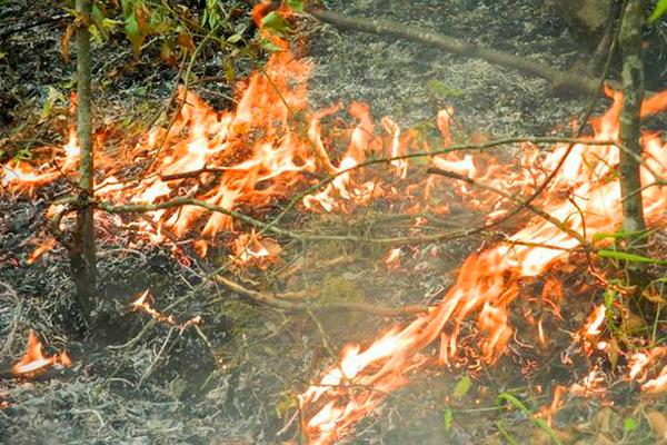 Низовой лесной пожар